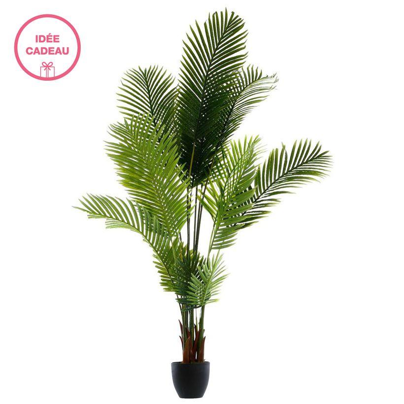 Arbuste en pots palmier