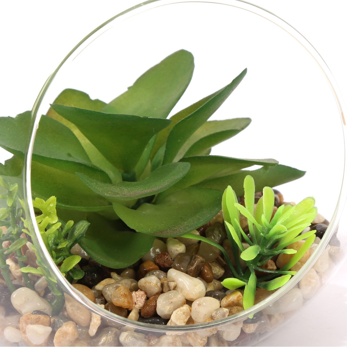 Plante succulente artificielle terrarium transparent