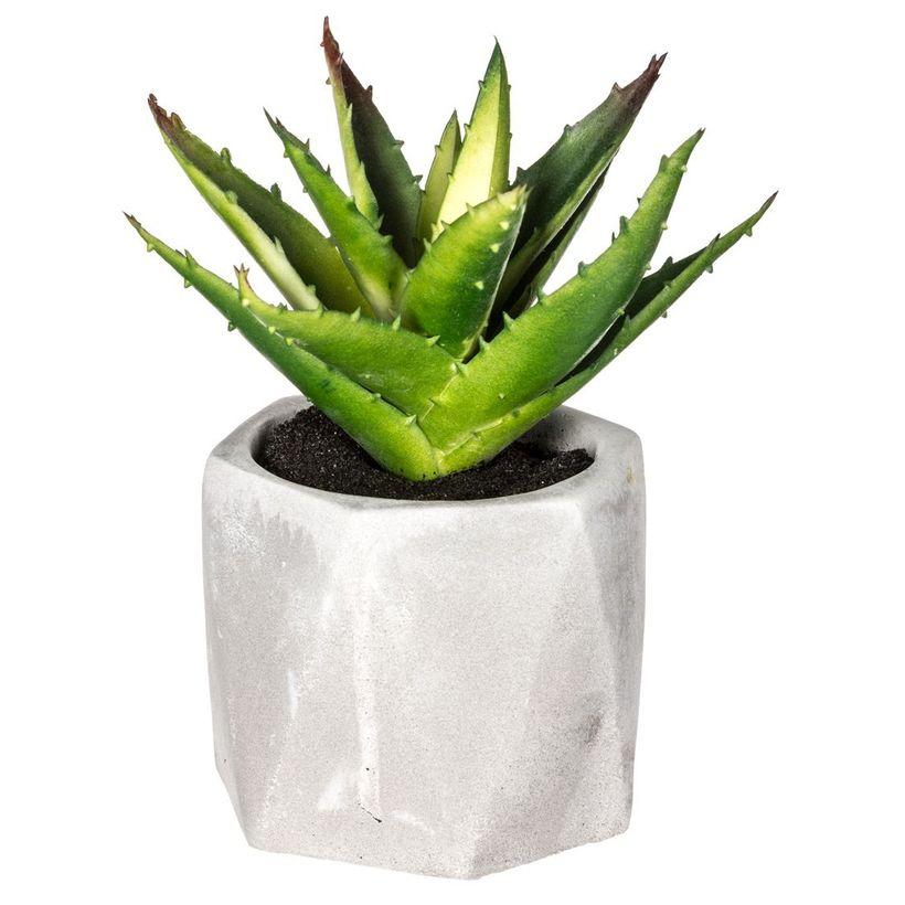 Plante pot Géometrik grasse